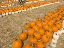 biały pomarańczowe banie Zdjęcie Stock
