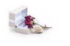 Biały prezenta pudełko z wysuszonym kwiatem i seashell z białym tłem Zdjęcie Stock