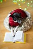 Biały psi noszący okulary i w reniferowy kostium stawiać łapach na otwartej książce Zdjęcia Stock