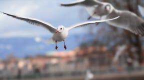 biały ptak Zdjęcia Royalty Free