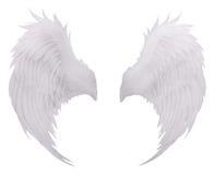 Biały ptaka skrzydła piórko, upierzenie odizolowywający biały tła use f Fotografia Stock