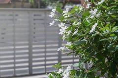 Biały pud kwiatu niebieskiego nieba słońca światła ranek Zdjęcia Royalty Free