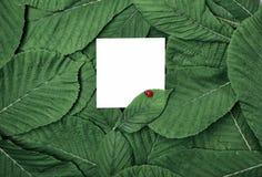 Biały pusty prześcieradło wśród zielonych liści Obraz Royalty Free