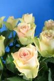 Biały róże Zdjęcia Royalty Free