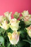 Biały róże Fotografia Royalty Free