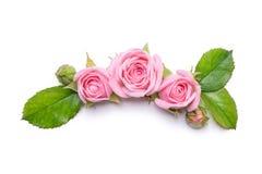 biały różowe tło róże Granica kwiaty Wzór dla zaproszenie karty Zdjęcia Royalty Free