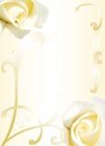 biały ramowe róże Zdjęcie Royalty Free