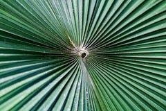 Biały Słoń palmy spirala zdjęcia royalty free