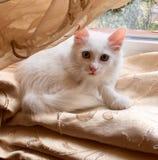 Biały słodki kot obrazy stock