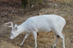 Biały samiec zakończenie Up zdjęcia stock
