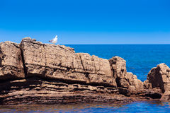 Biały seagull na skalistej plaży Zdjęcie Royalty Free