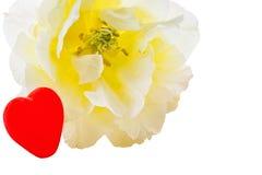 Biały serce na białym tle i tulipan Fotografia Stock