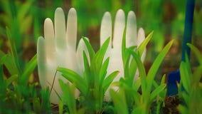 Biały silikonowy rękawiczka ogród nikt zbiory