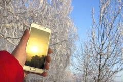 Biały smartphone w ręce z zmierzchu odbiciem przeciw tłu rozmyty zima las, fotografia royalty free
