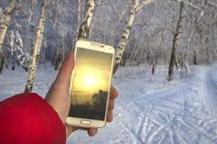 Biały smartphone w ręce z zmierzchu odbiciem przeciw tłu rozmyty zima las, zdjęcia royalty free