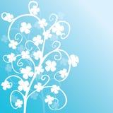 biały tło koniczyny Zdjęcie Royalty Free