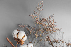 Biały tło z gałąź bawełniana roślina Obraz Royalty Free