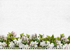 Biały tło z jabłczani okwitnięcia Obrazy Royalty Free