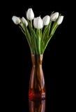Biały tulipan na czarnym tle obraz royalty free