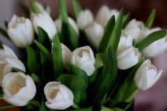 Biały tulipanu bukiet: pączki i liście obraz stock