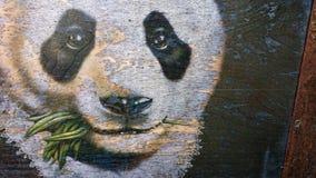 Biały twarz niedźwiedź polarny je zielenie fotografia stock
