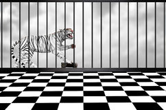 Biały tygrys ilustracja wektor