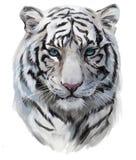 Biały tygrys ilustracji
