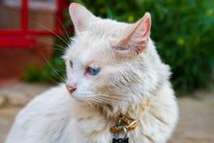 Biały uliczny kot Fotografia Royalty Free