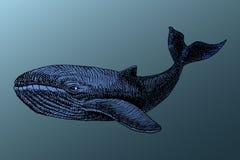 Biały wieloryb pod wodą Obrazy Stock