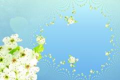 Biały wiosna kwiatu tekstury nieba błękita tło Fotografia Royalty Free