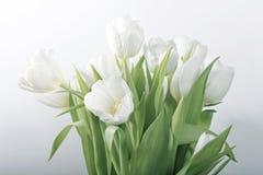 biały wiosna tulipany obraz stock