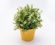 Biały - zielony plastikowy dekoracyjny kwiat w żółtym plastikowym garnku jest na białym tle zdjęcie stock