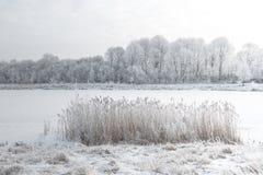 Biały zima krajobraz śnieżna rzeka i mroźni drzewa na brzeg - obraz stock