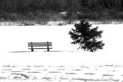 biały zimowy Obrazy Royalty Free