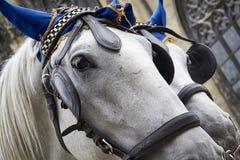 Białych koni bliźniaków portreta zbliżenia jednakowa uzda zdjęcia stock