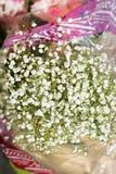 Białych kwiatów łyszczec paniculata Fotografia Stock