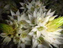 Białych kwiatów bukieta UP zakończenie Zdjęcia Royalty Free
