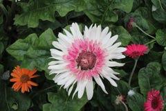 Białych kwiatów i Greenry tapety wizerunek zdjęcia stock