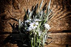 Białych kwiatów kłamać Zdjęcie Royalty Free
