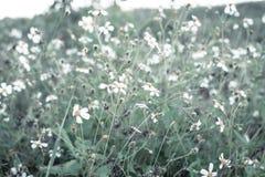 Białych kwiatów trawy lasowa natura zdjęcie stock
