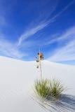 Białych piasków Krajowy zabytek Obraz Royalty Free