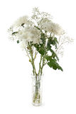 Białe chryzantemy Obraz Royalty Free