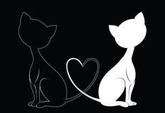 białe czarne koty Obrazy Royalty Free
