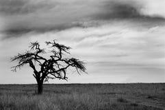 białe drzewo, czarny Fotografia Royalty Free