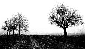 białe drzewo, czarny Zdjęcia Royalty Free