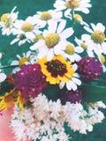 bia?e kwiaty zdjęcia royalty free