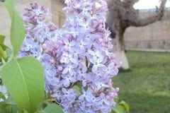 bia?e kwiaty fotografia stock