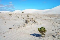 Białe lancelin piaska diuny, zachodnia australia 20 zdjęcie stock