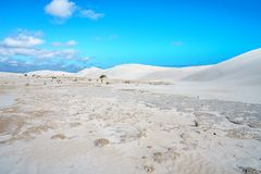 Białe lancelin piaska diuny, zachodnia australia 22 obraz royalty free