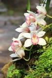 Białe orchidee na drzewie Zdjęcie Stock